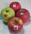 りんごセットs-.jpg